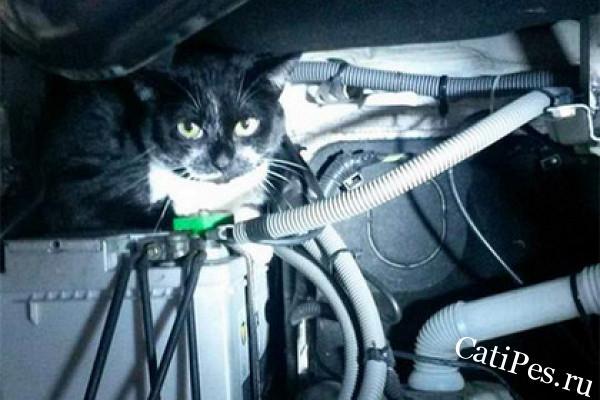130 километров преодолел черно-белый кот под капотом