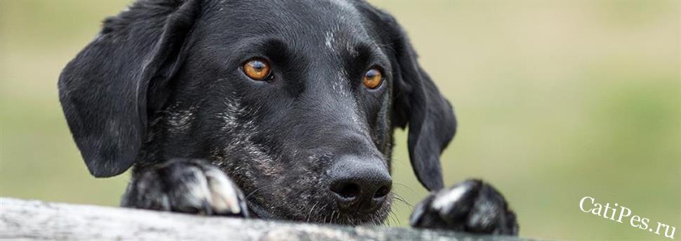 Проблемы ранней социализации собак