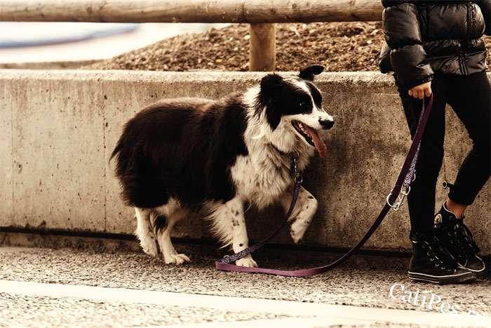 Негативное научение собаки, привыкание