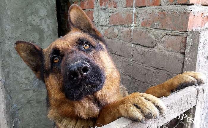 Анализ формы научения, дрессировка собак