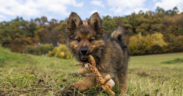 Первые команды для собаки
