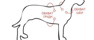 Как измерить собаку? Собачьи размеры
