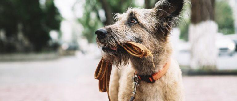 Формы научения собак