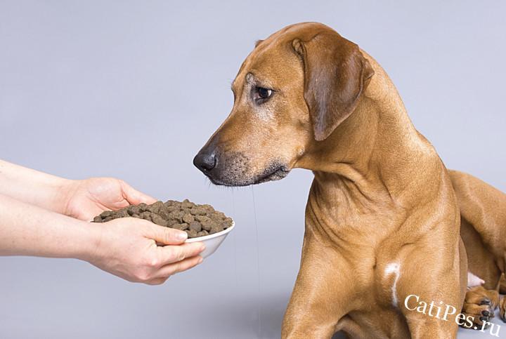 Полезен ли сухой корм для собак