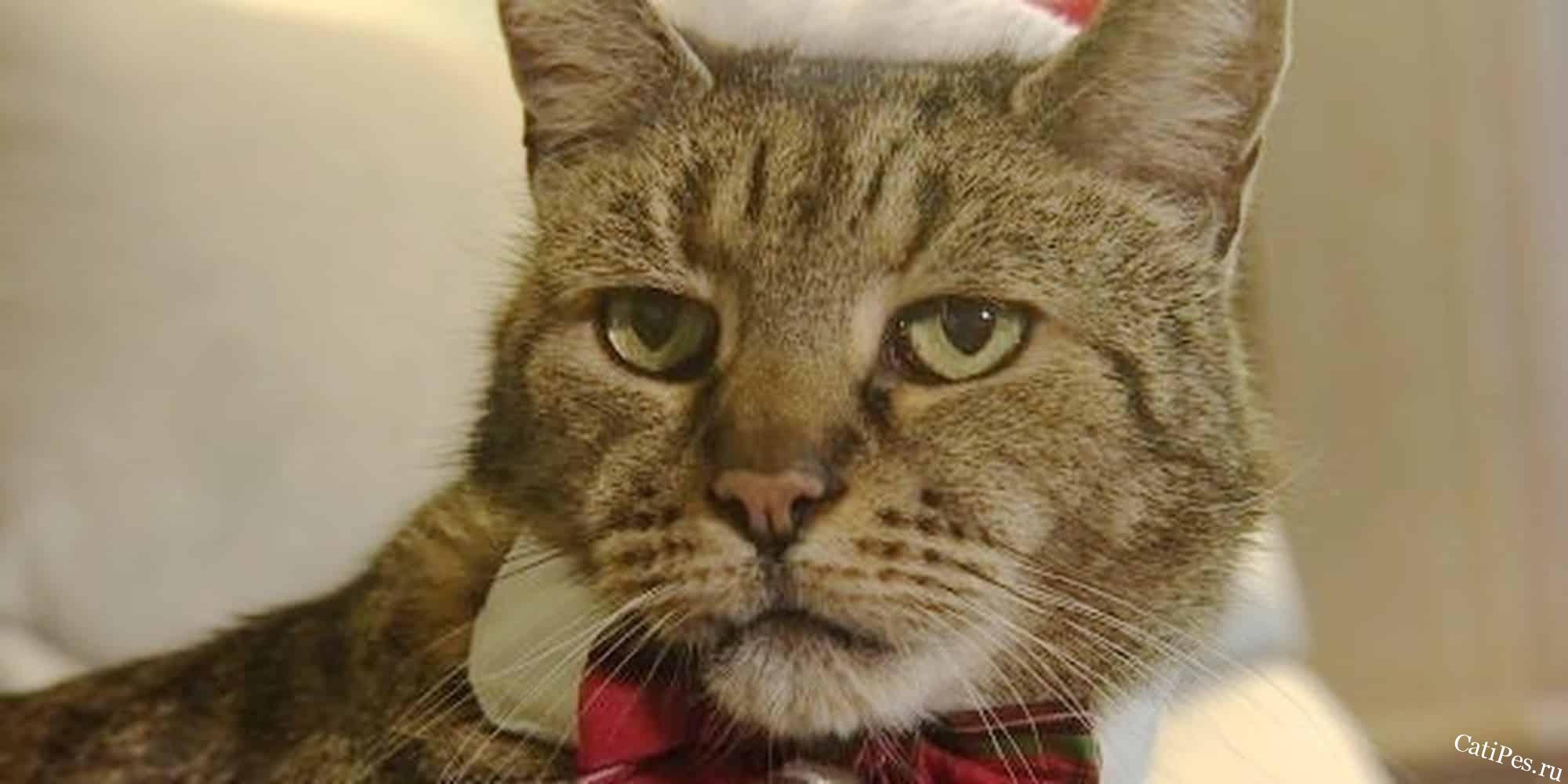 Скончался самый старый в мире кот