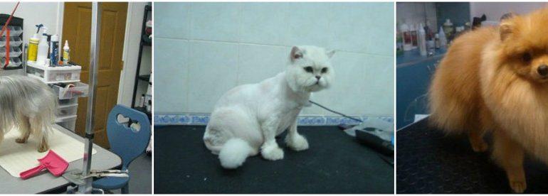 Профессиональный груминг, стрижка собак и котов