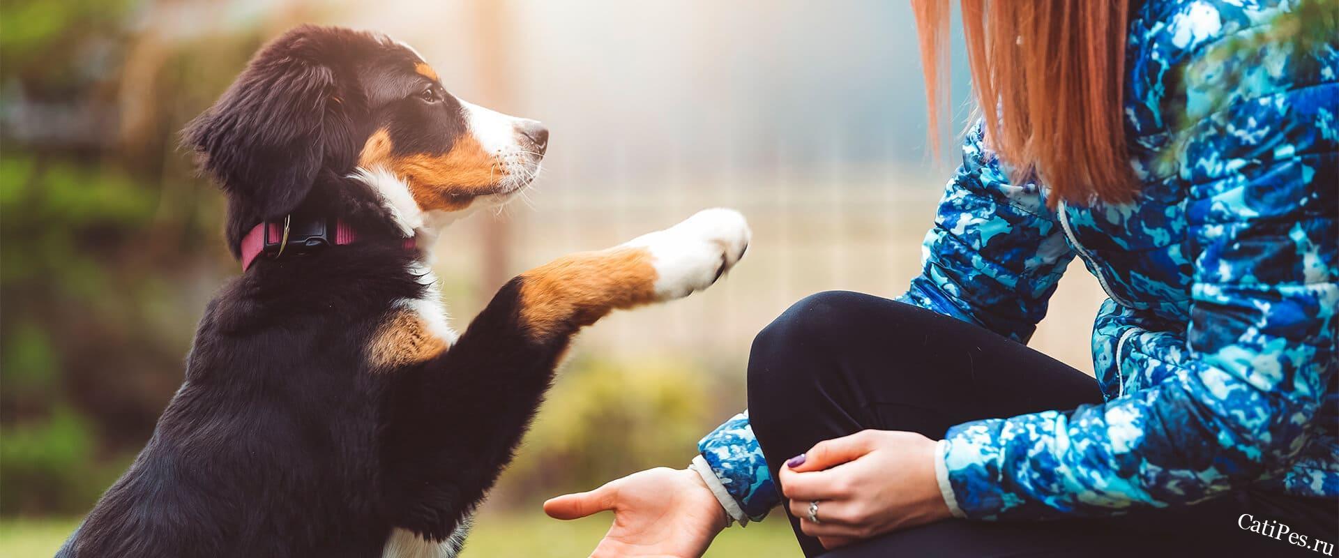 Методики дрессировки собак