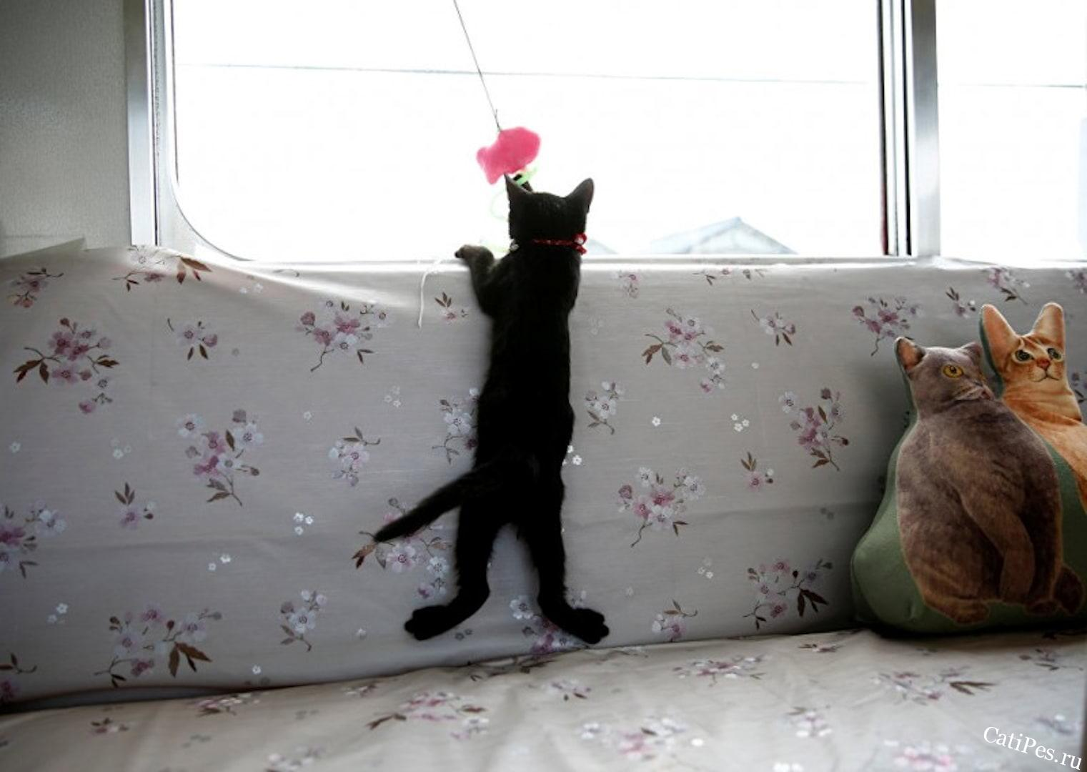 Кошки в поезде