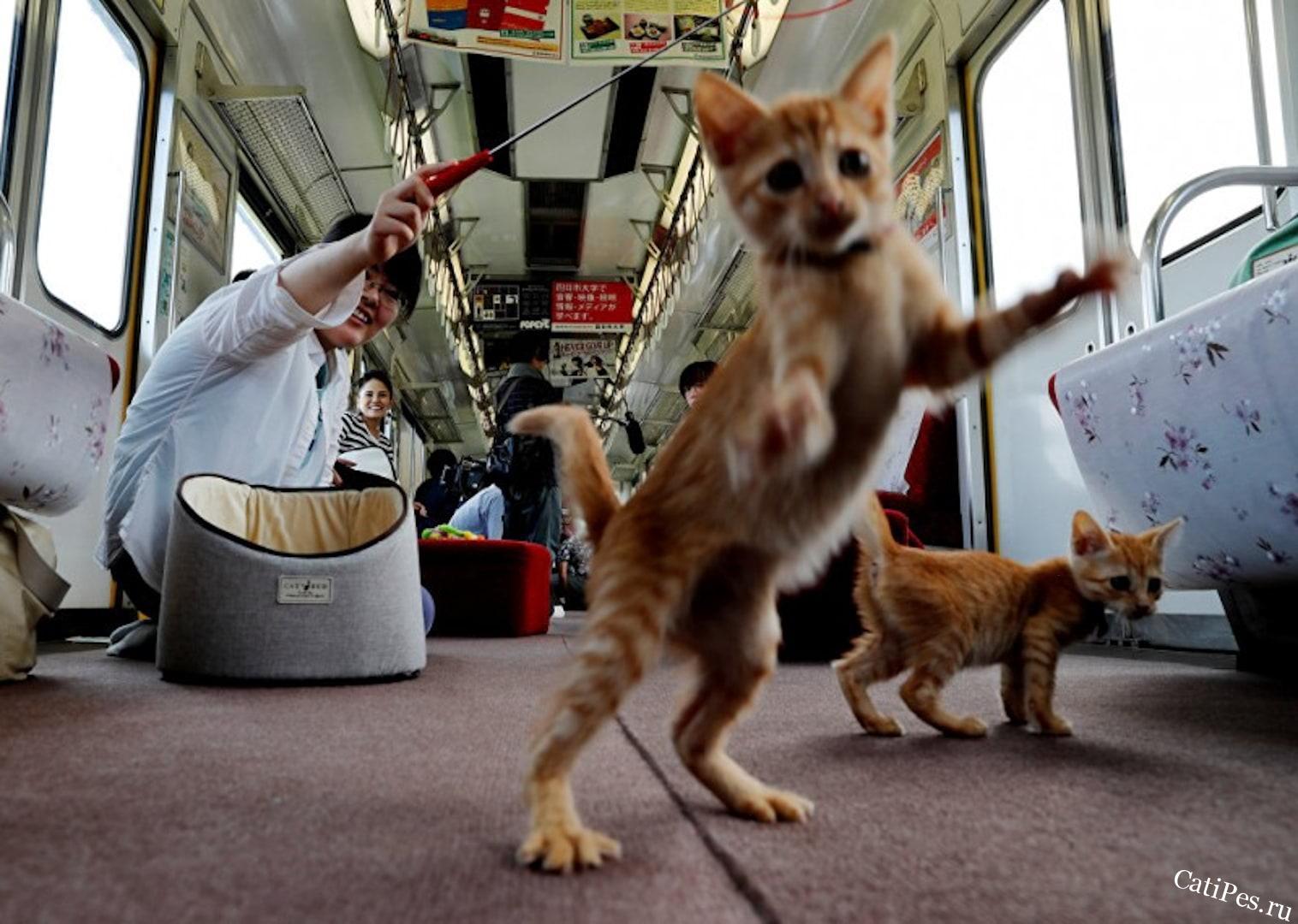 Приятная поездка с кошечками в кошачьем поезде