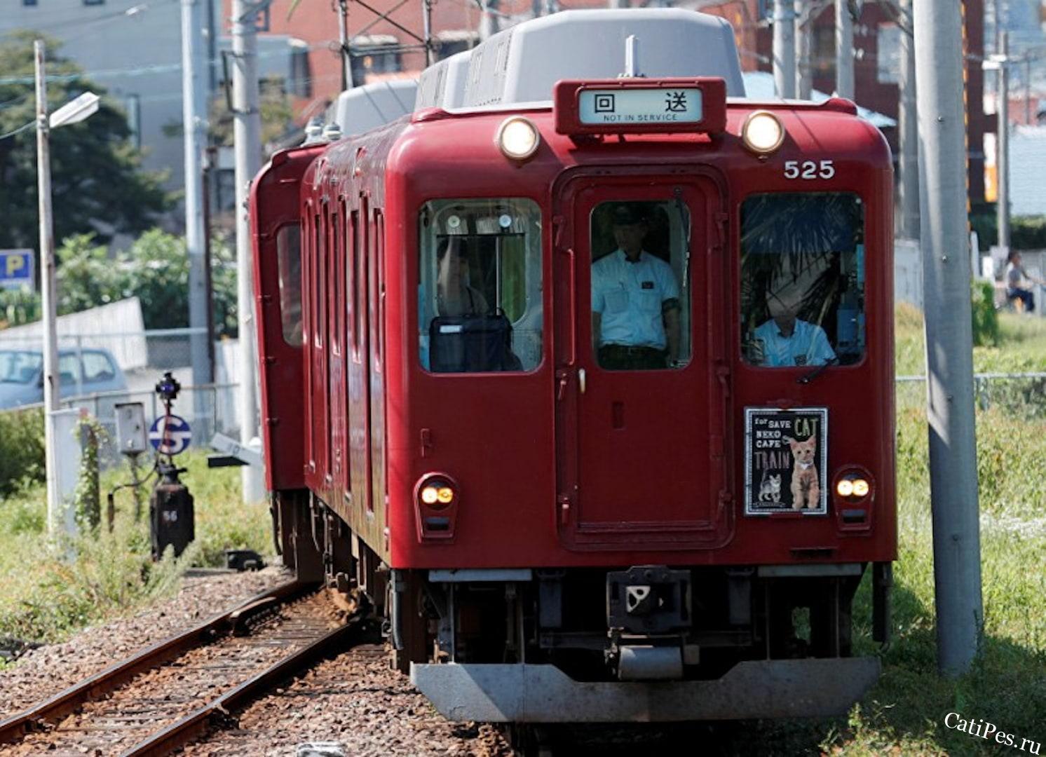 Первый в мире кошачий поезд