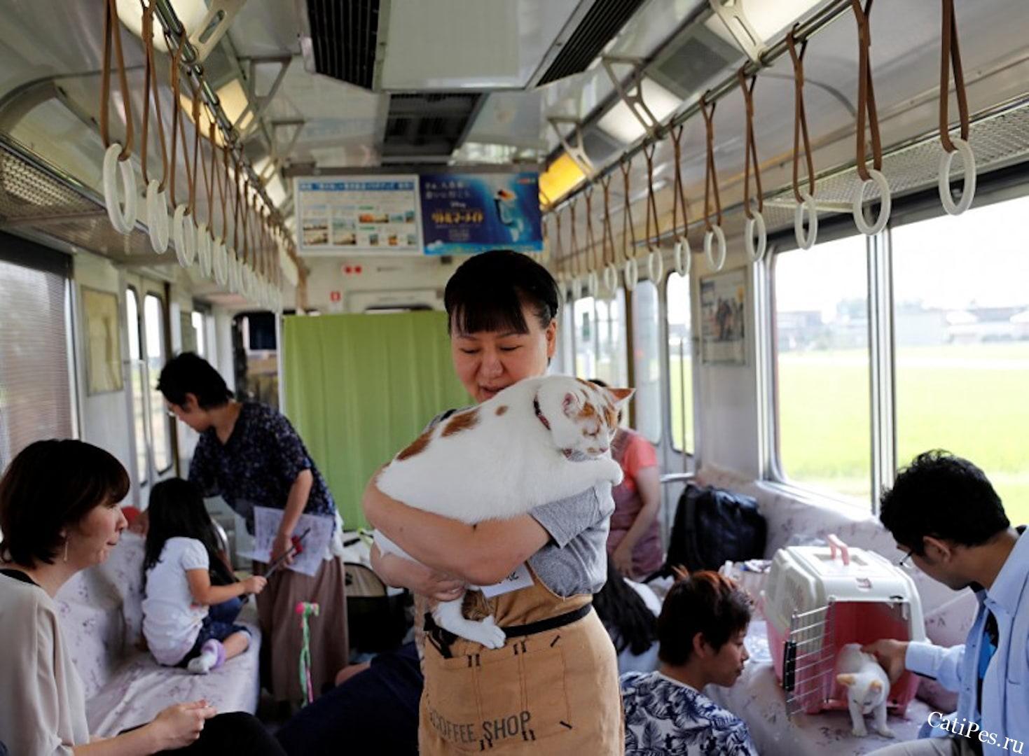 Кошачий поезд