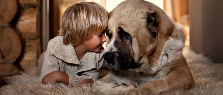 Как собаки говорят с нами?