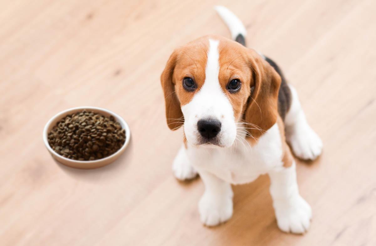 У вас появился щенок. Чем кормить щенка