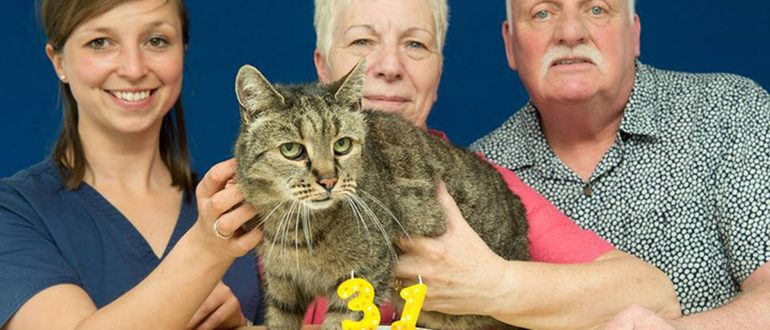 В Британии умер самый старый в мире кот
