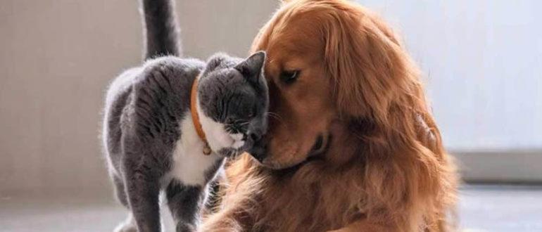 Зачем кошкам и собакам хвосты