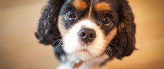 Породы собак для карантина