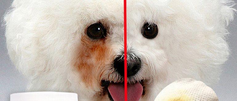 У собаки следы от слез. Причины. Как избавиться