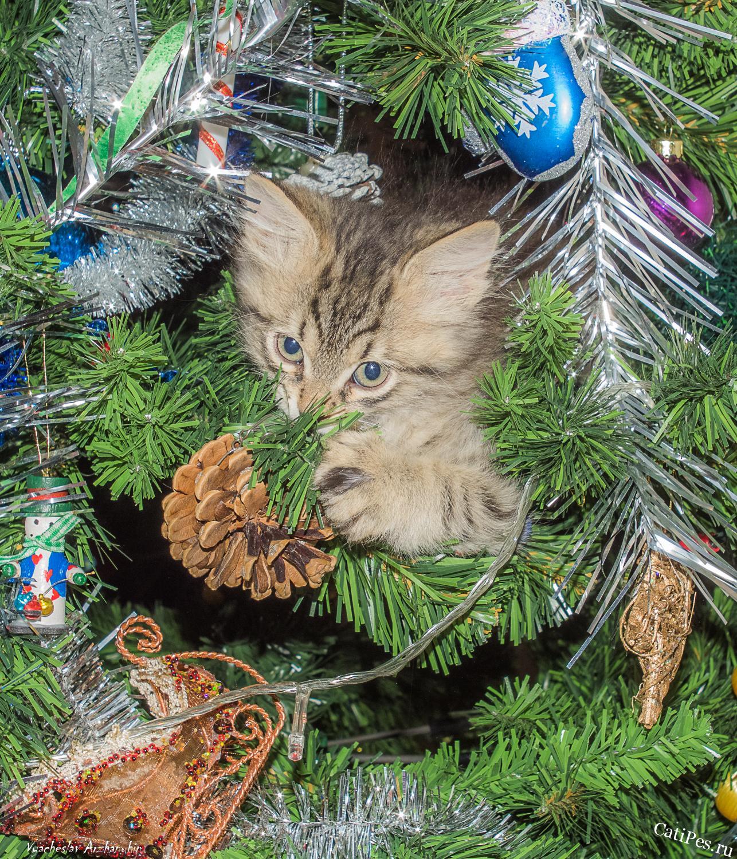 Как обезопасить новогоднюю елку от котов и собак.