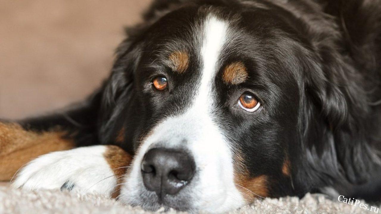 Пожилая собака: правила ухода за стареющим питомцем