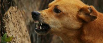 Поведение собак: свои и чужие