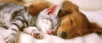 Стерилизация кошек и собак - за и против?