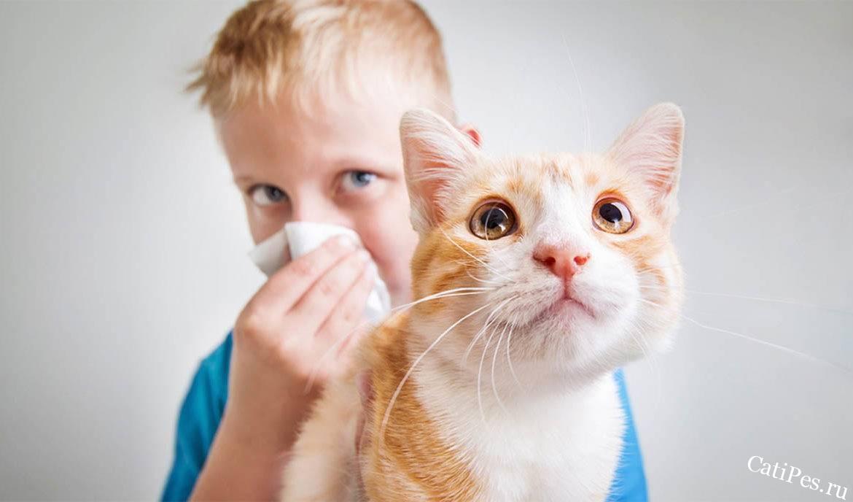 На каких кошек не бывает аллергии