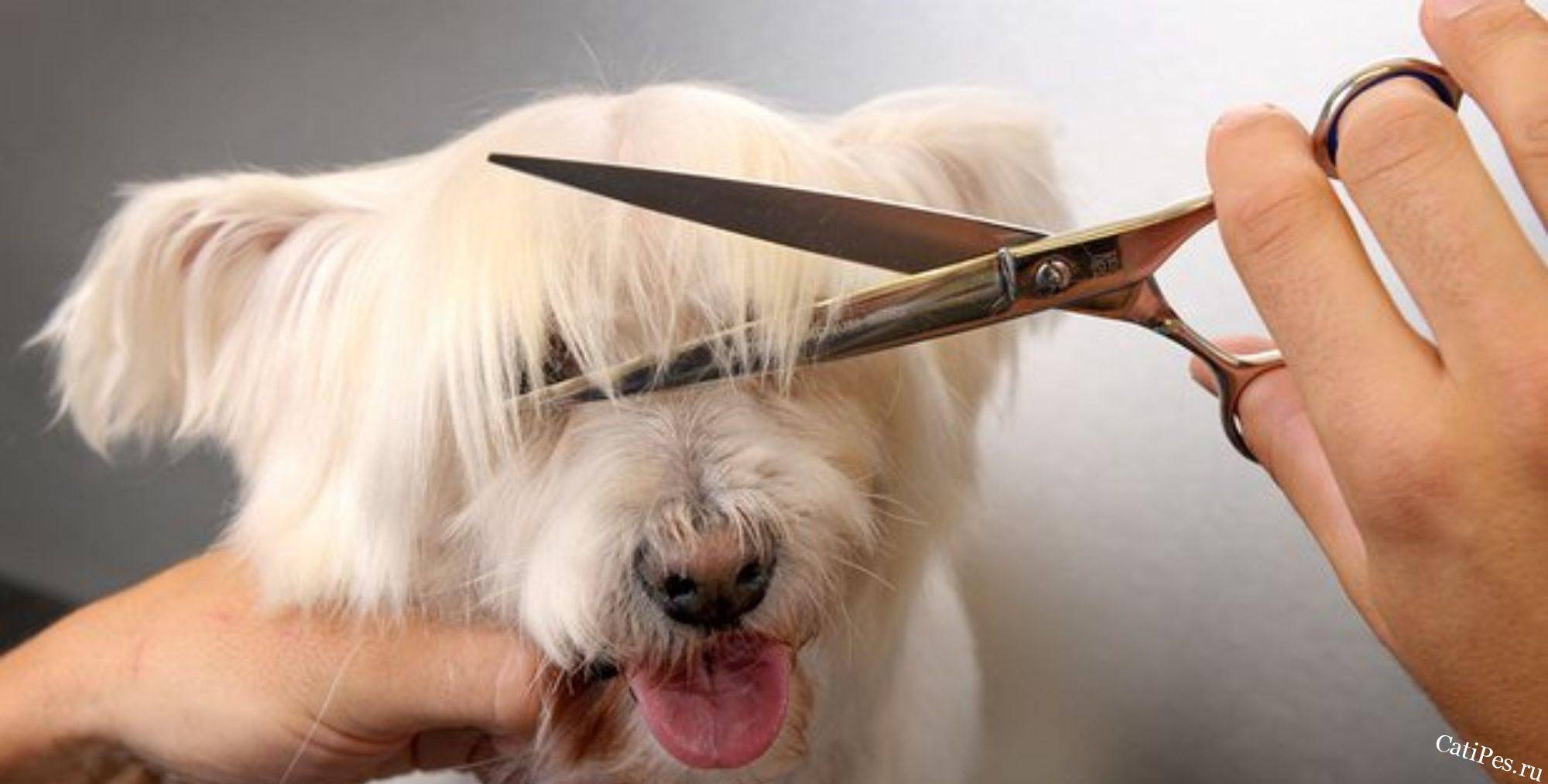 Как ухаживать за шерстью собак