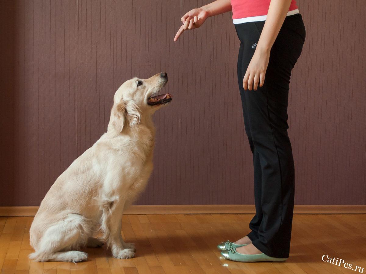 Самостоятельная дрессировка собаки в домашних условиях