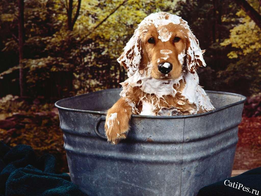 Как помыть собаку? Вопросы и ответы