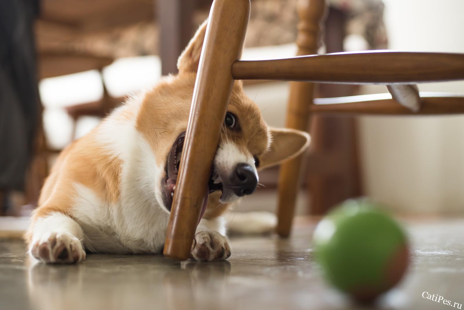 Почему собака грызет. Как отучить