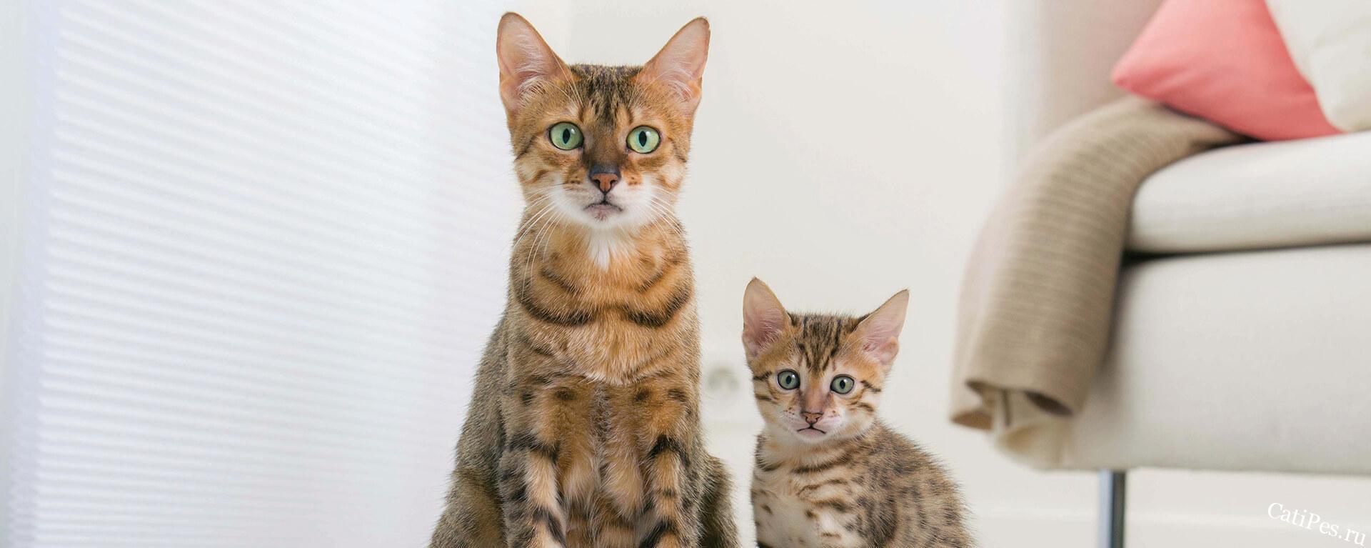Отлучение котенка от мамы - когда забирать котят