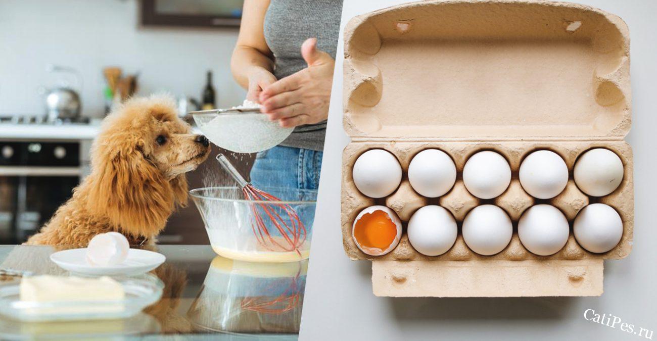 Можно ли собакам яйца и как их правильно давать