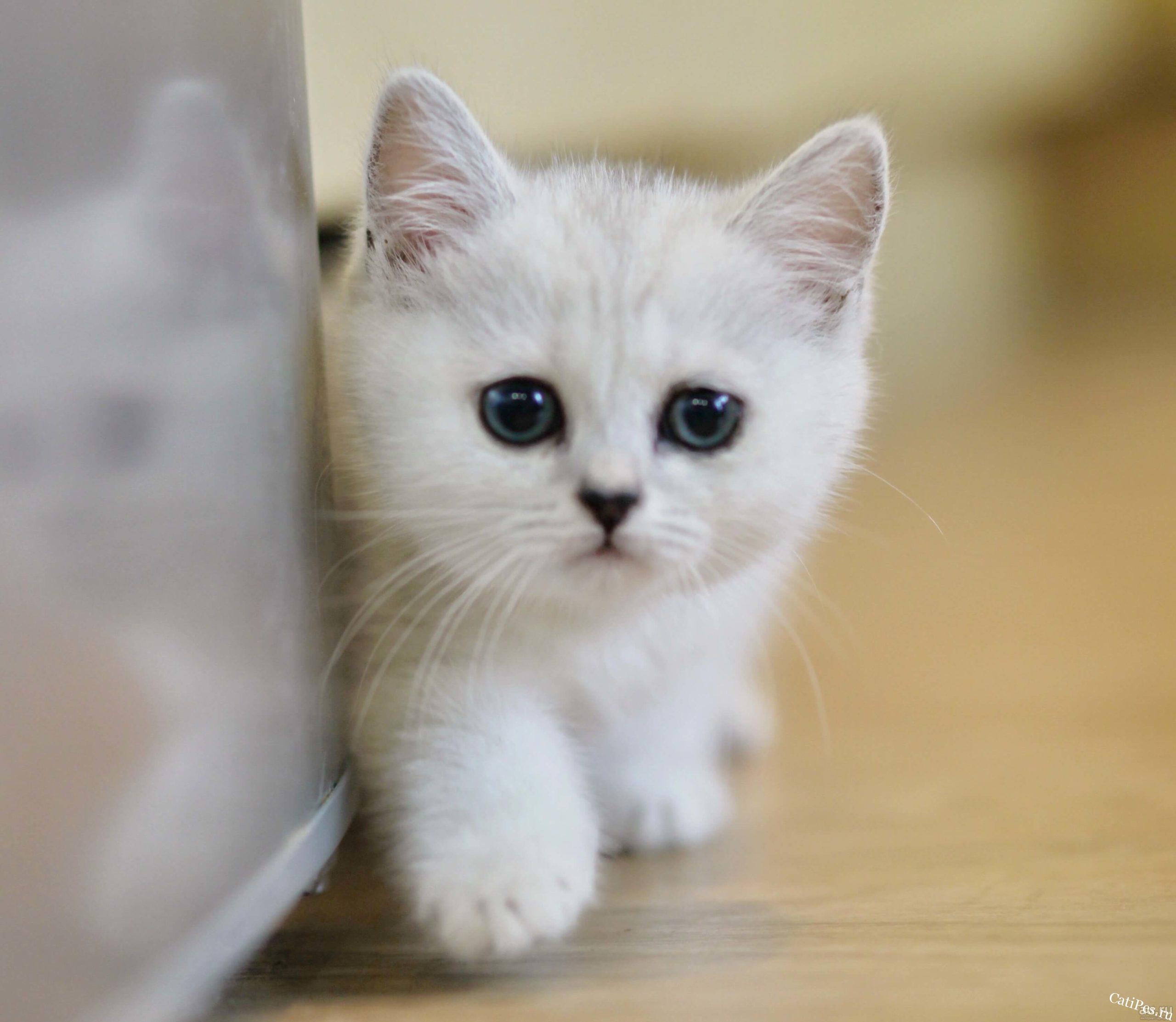 Будьте внимательны приобретая котят
