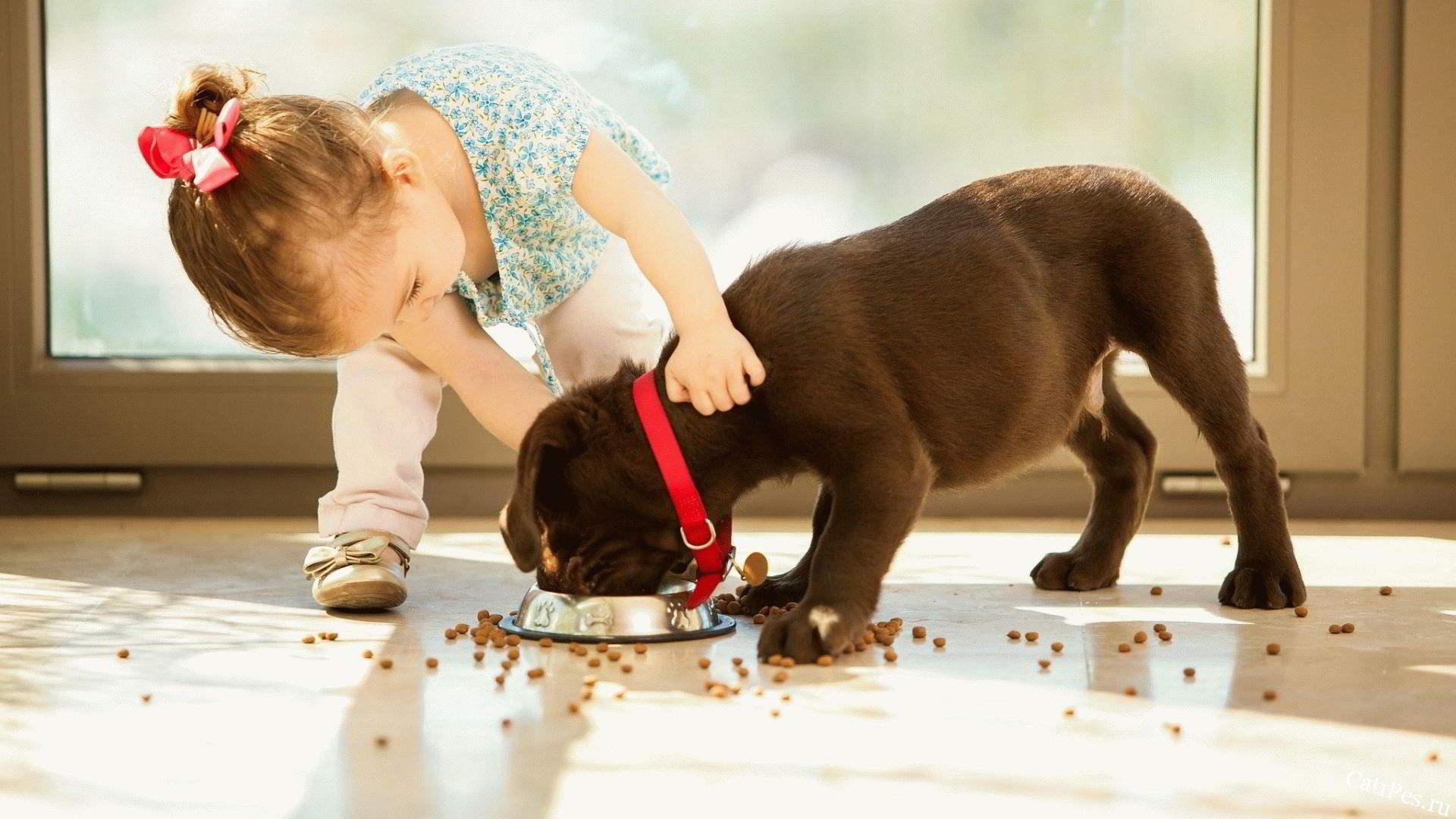 Как подобрать для щенков хороший и правильный корм?