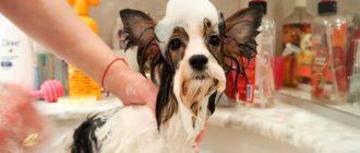 Как вымыть собаку в ванной