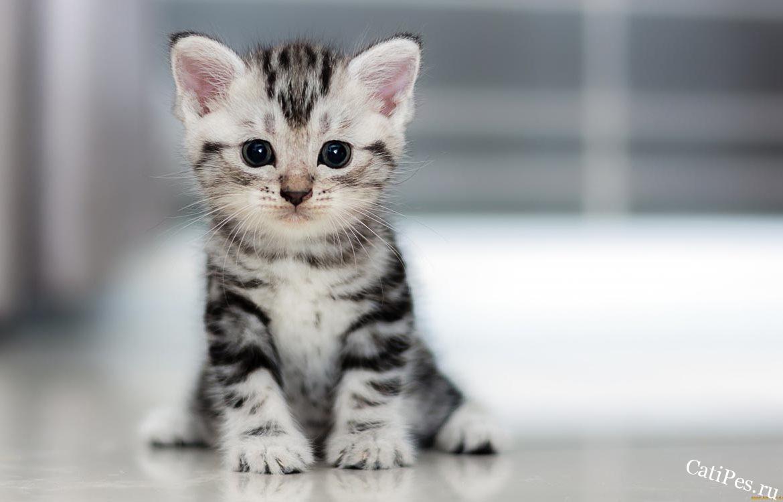 Как установить первый контакт с котенком