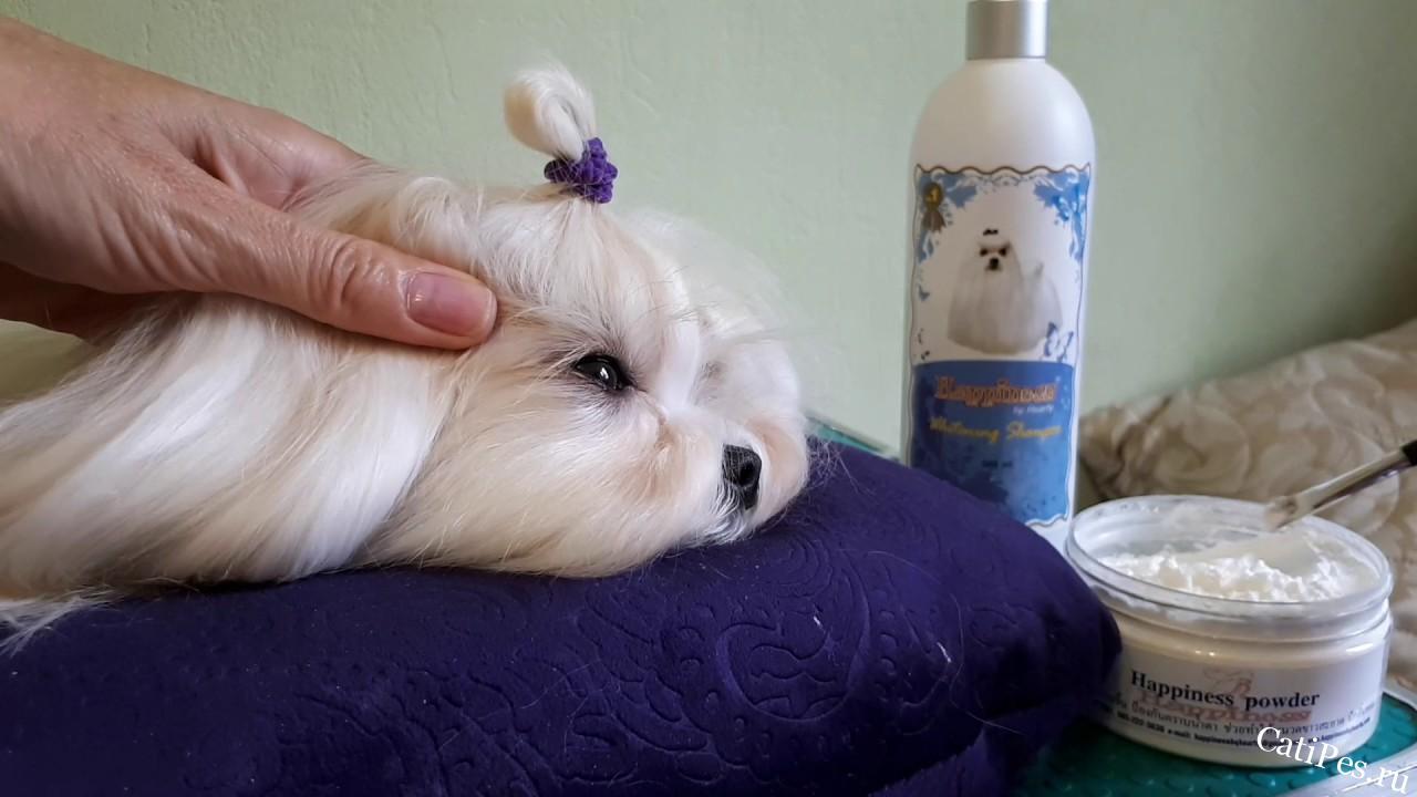 Как быстро и легко избавиться от слезных дорожек у собаки