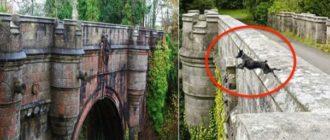 Мост собак-самоубийц
