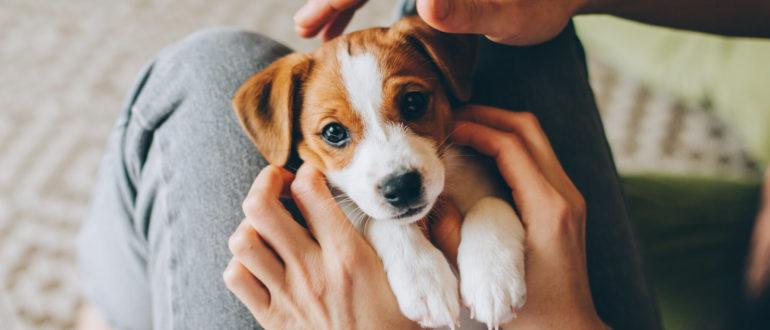 Приучите своего щенка к порядку во время пандемии за 12 шагов