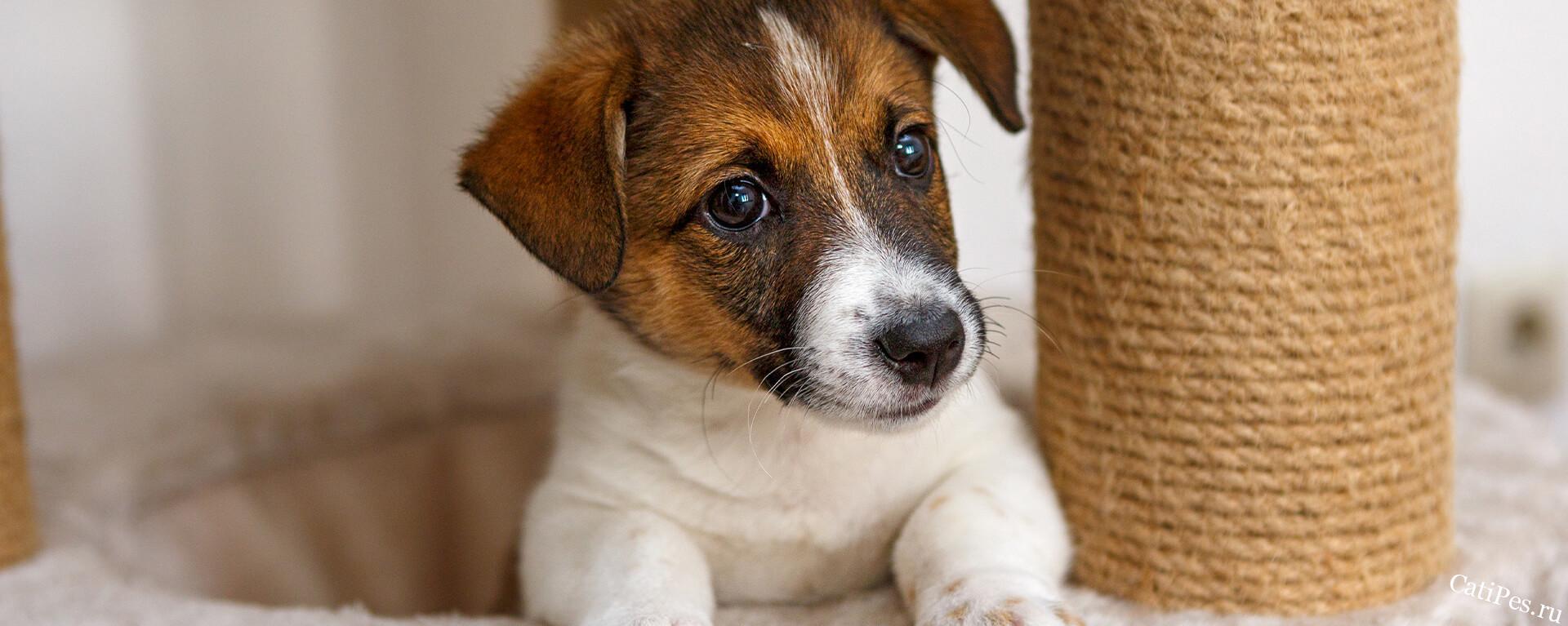 Дрессировка щенка в домашних условиях
