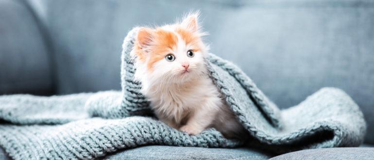 Выбор котенка -мал золотник, да дорог!