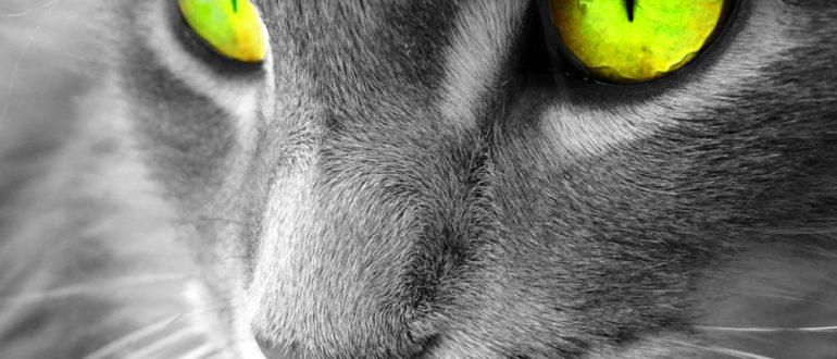 Визуальный контакт c котенком