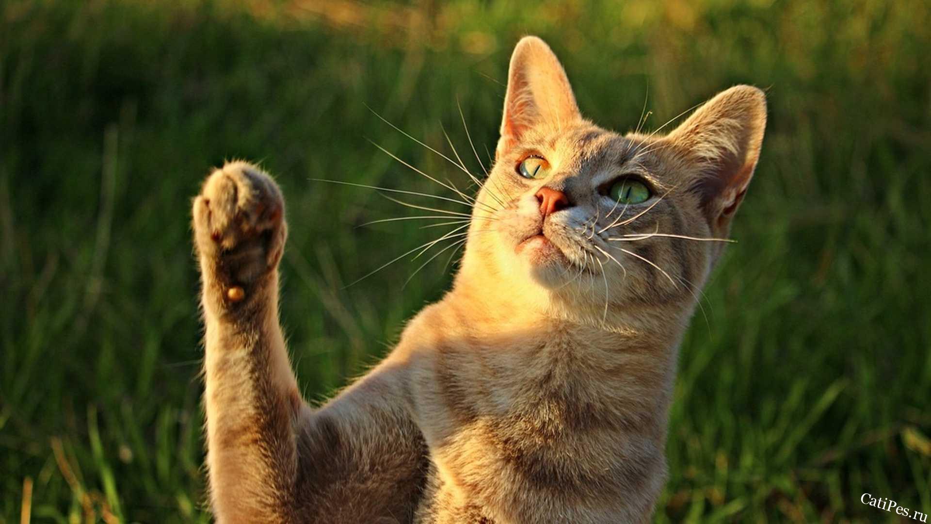 Клички для кошек девочек