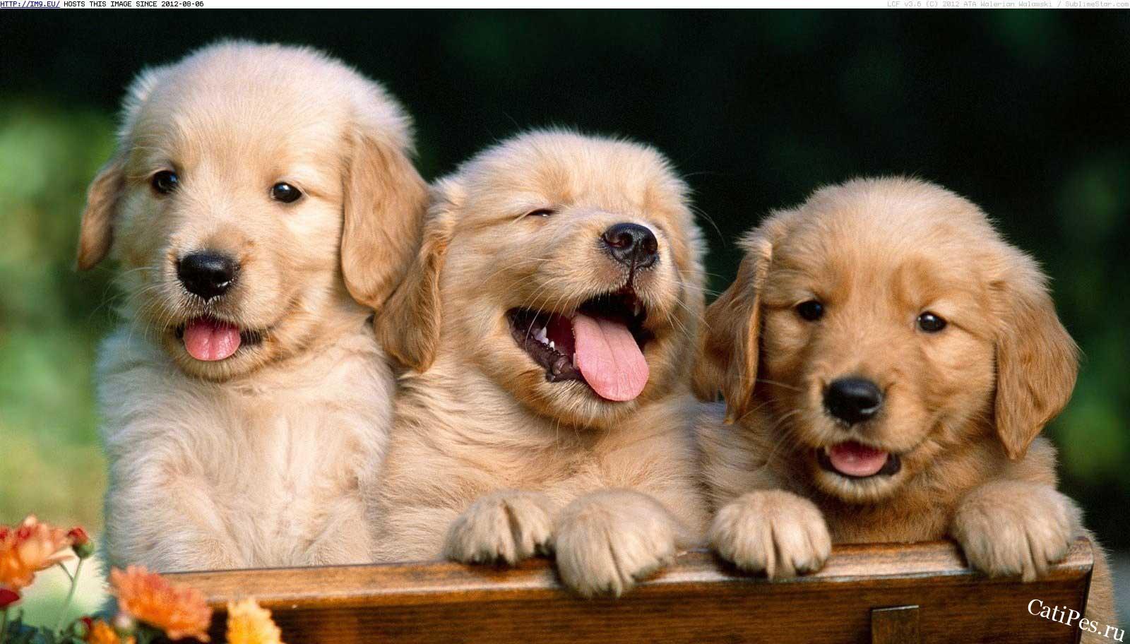 Клички собак популярные имена кобелей и сук