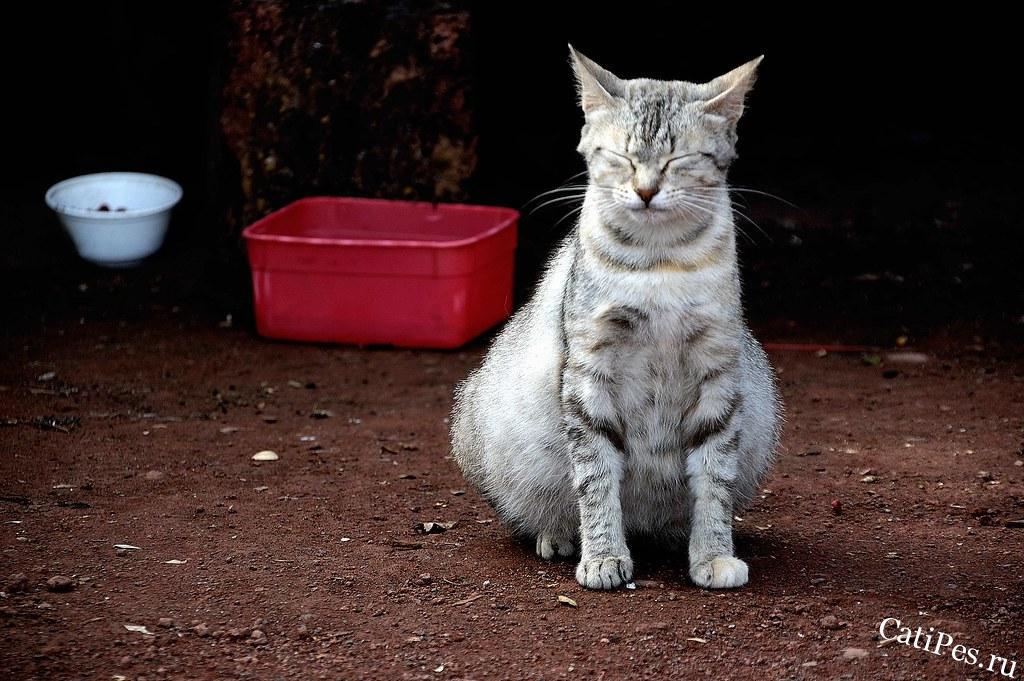 Как узнать, беременна кошка или нет в домашних условиях
