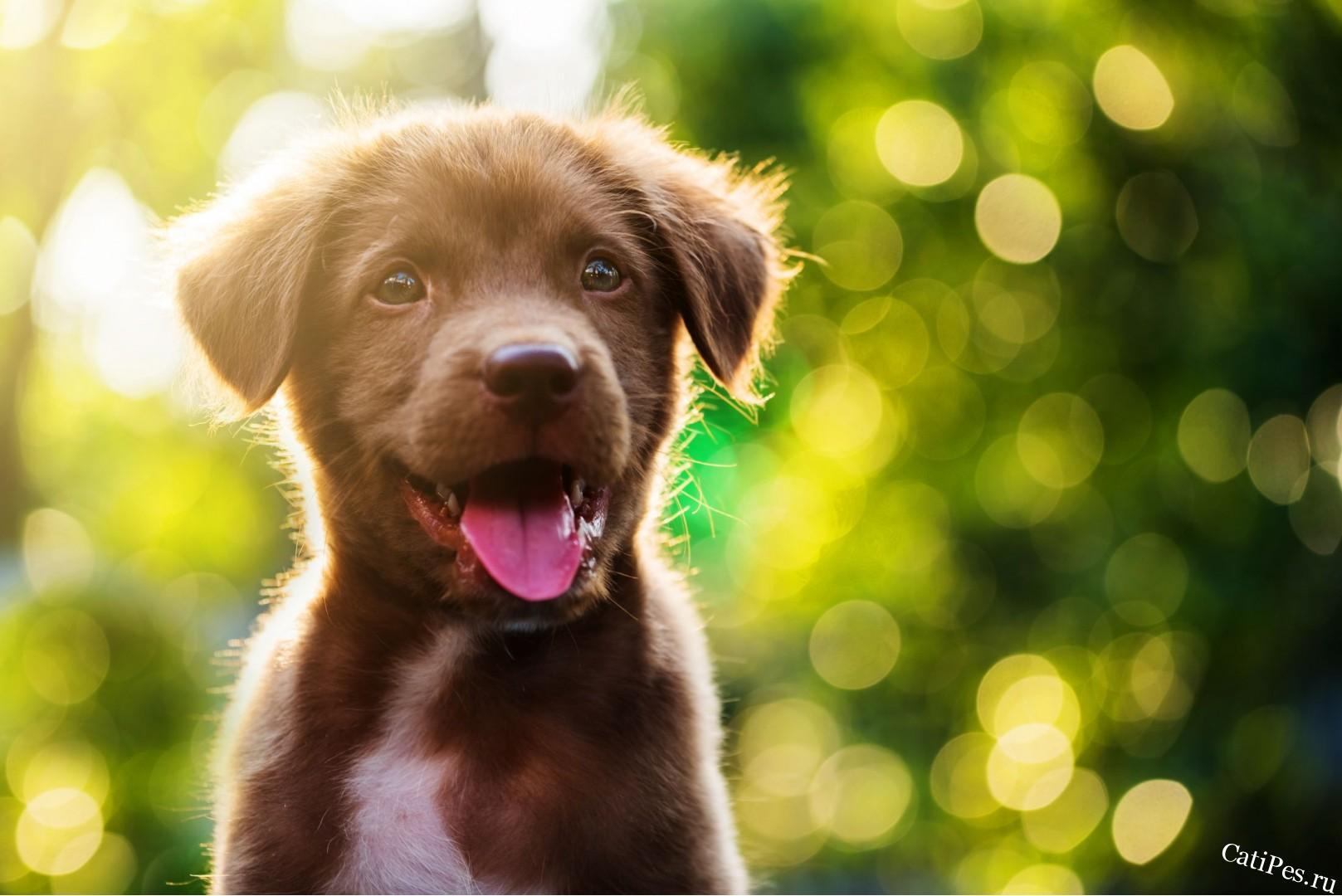 Самые популярные клички для собак девочек