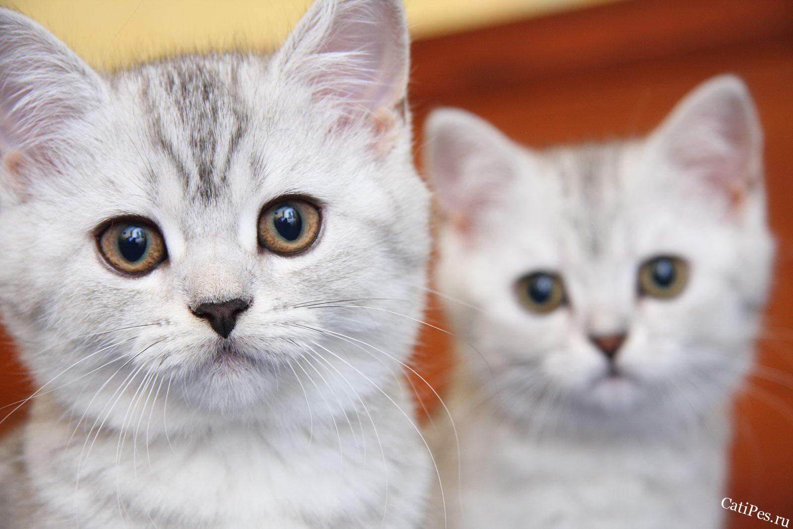 Клички для кошек и котов
