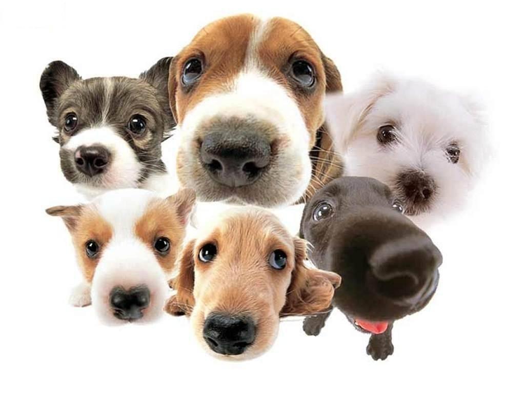Кличка для собаки