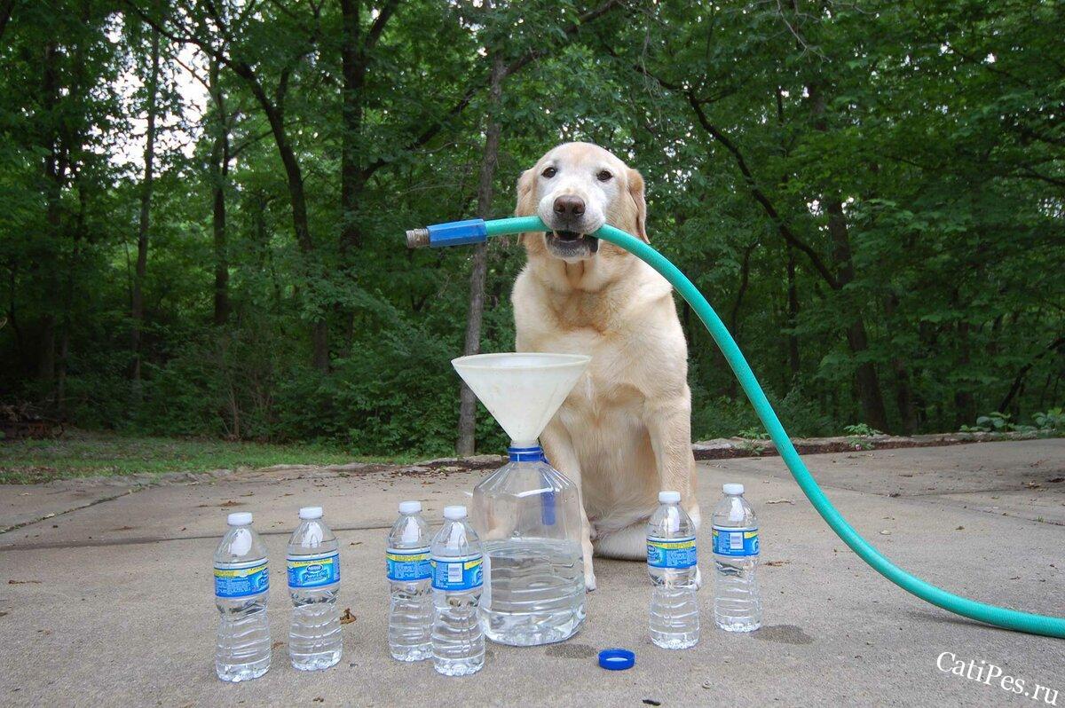 Собака постоянно просит воду и много пьет, что делать?